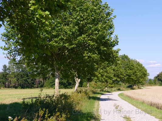 Feldweg / Jahreszeiten 24