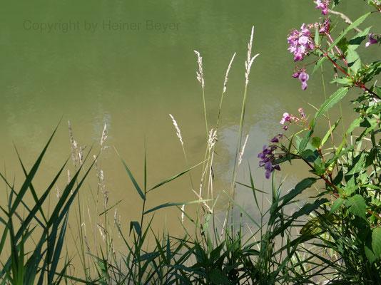 Himalaya- Springkraut - Blumen und Blüten 22