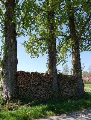 Holzstoß / Jahreszeiten 18