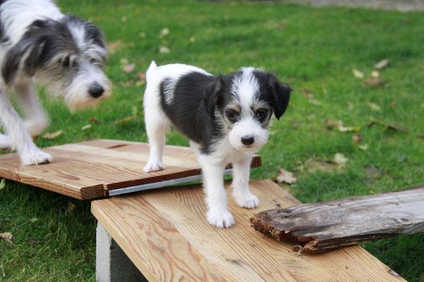 Aruba und Bailey (alias Buzzle)