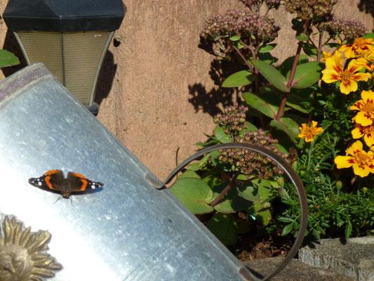 Naturnaher Garten Ebel,  Auszeithaus AUSZEIT MITTENDRIN, Ochtendung