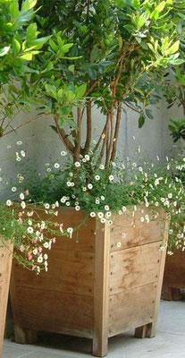 Sevilla- hardhouten plantenbak - recht zonder rand