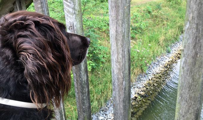 Nahla macht Urlaub am Zechliner See...