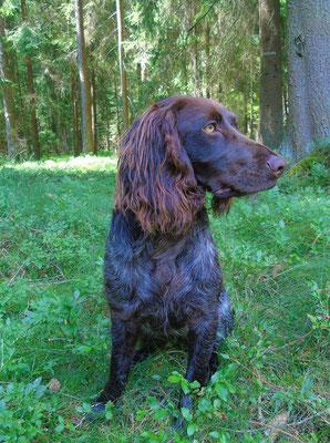 Helene vom Garlstorfer Wald