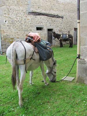 En route vers Compostelle avec un âne