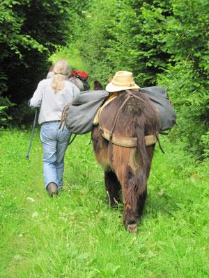 le Chemin de Saint-Jacques avec un âne