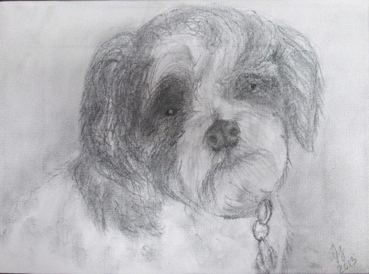 Charlie.  Charcoal on canvas. March 2013