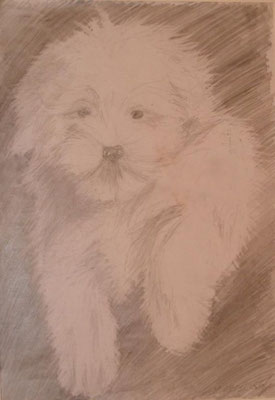 Puppy. Pencil drawing. 2003