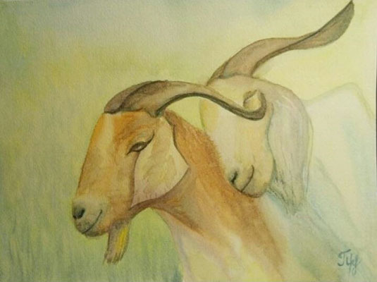 "Goats. Watercolors on paper, 9"" x 12"". February 2015"