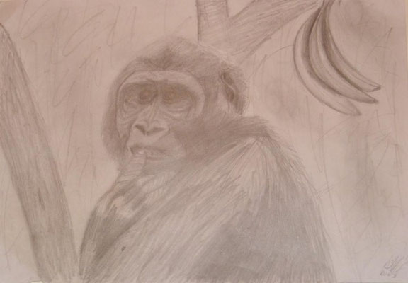 Monkey. Pencil drawing. 2003ish