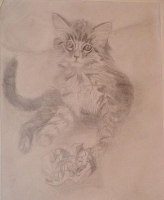 Kitten. Pencil drawing. 2003ish