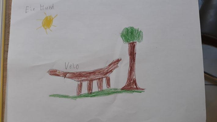 Florians Wunschtier ist der Hund Velo...