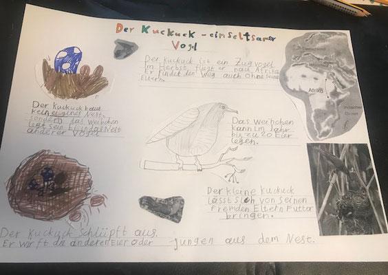 Kira hat viele Informationen über den Kuckuck gesammelt und anschaulich präsentiert.