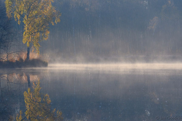 Frühmorgens an einem Moorsee