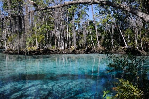 Kristallklares Wasser des Crystal River, Florida