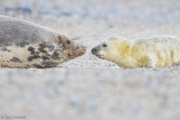Mutter und Jungtier beschnuppern sich