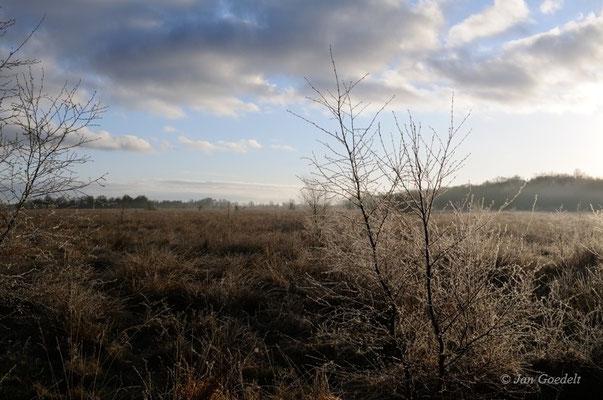 Vorfrühling im Hartshoper Moor, Schleswig-Holstein