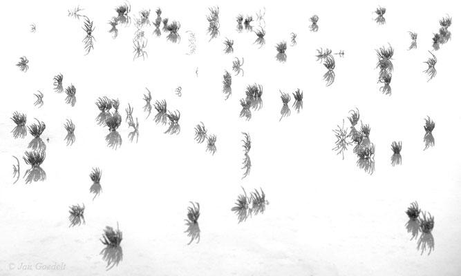 High-Key-Aufnahme einer Quelleransammlung in schwarz-weiß