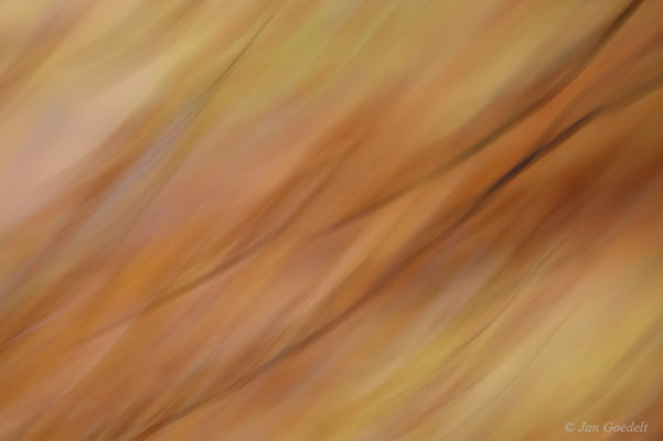 Wischerfoto eines herbstlichen Buchenastes