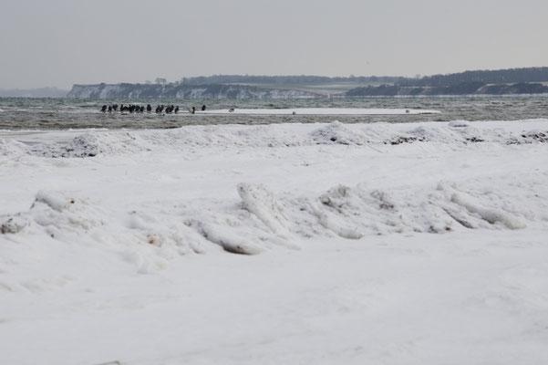Winterliche Ostsee mit Kormorangruppe, Schleswig-Holstein