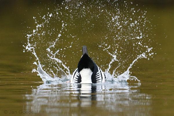 Balzpose mit Wassertreten