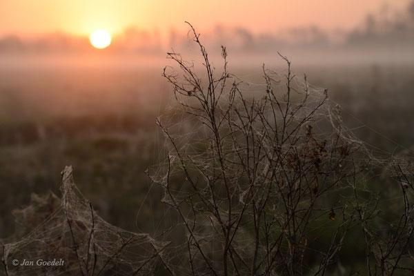 Sonnenaufgang im Ochsenmoor, Niedersachsen