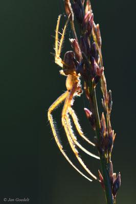 Herbstspinne im Gegenlicht