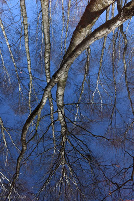 Baumspiegelung in einem Moorsee, Schleswig-Holstein