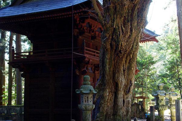 与楽山観音寺(寺山観音寺)の楼門とイチョウ:矢板市