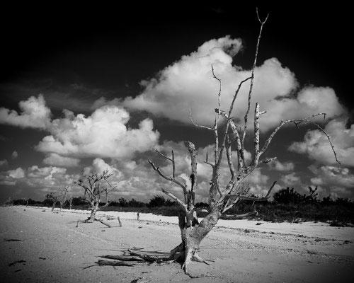 Highland Beach 1, Everglades