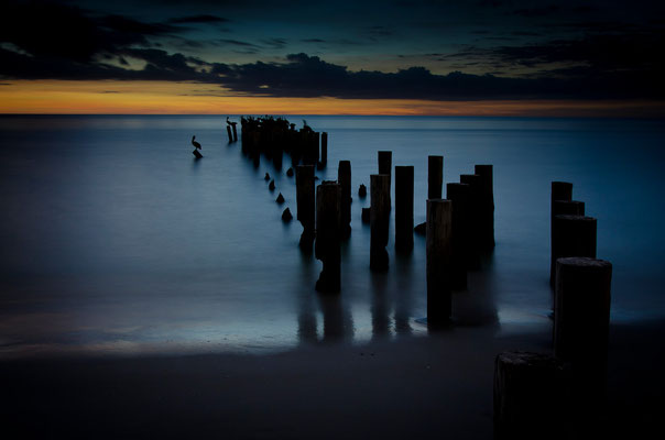 Pelicans and Pilings Sunset, Naples