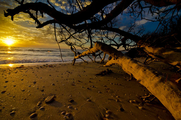 Honeymoon Mangrove Sunset