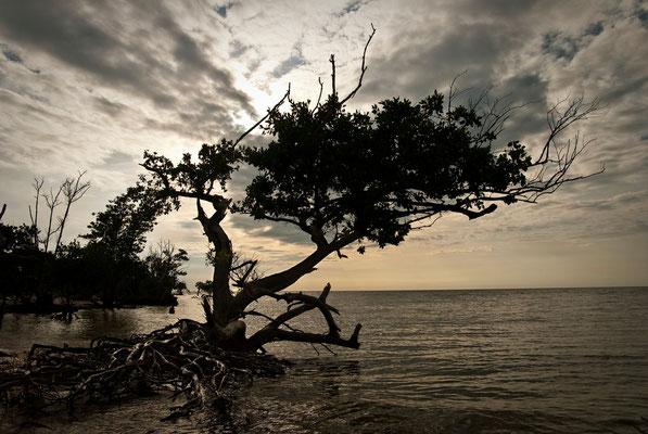 New Turkey Key Sunset, Everglades