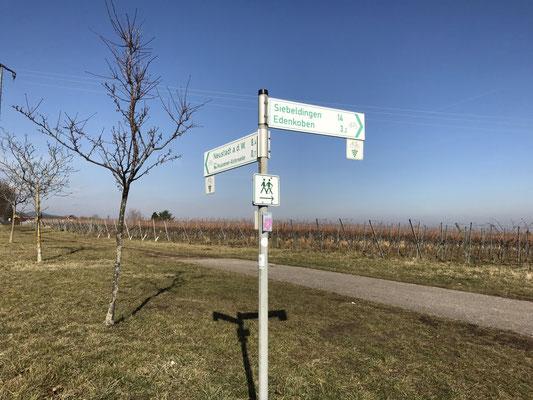 Richtungsweiser für Radwege nach Neustadt, Alsterweiler, Edenkoben und Siebeldingen.