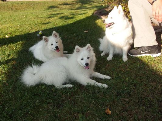 v.l.n.r.: Aiko, Amaya und Hana
