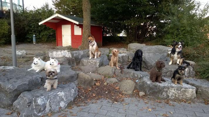 Hundetraining Horgenzell