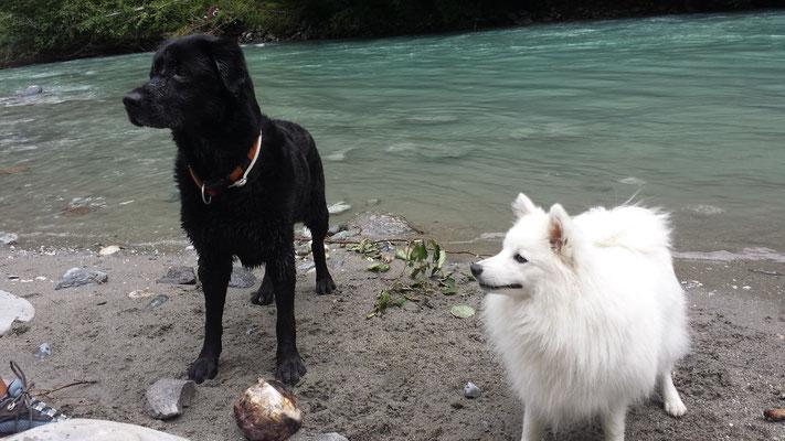 Laika und Aiko