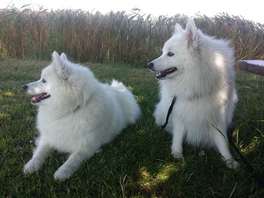 Hana und Aiko beim Pausieren im kühlen, noch taufrischen Gras.