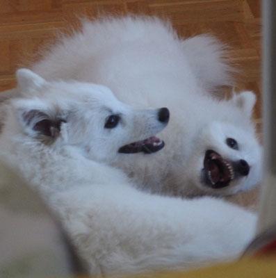 links Aiko, rechts Maya beim schönsten aller Spiele: dem miteinander raufen
