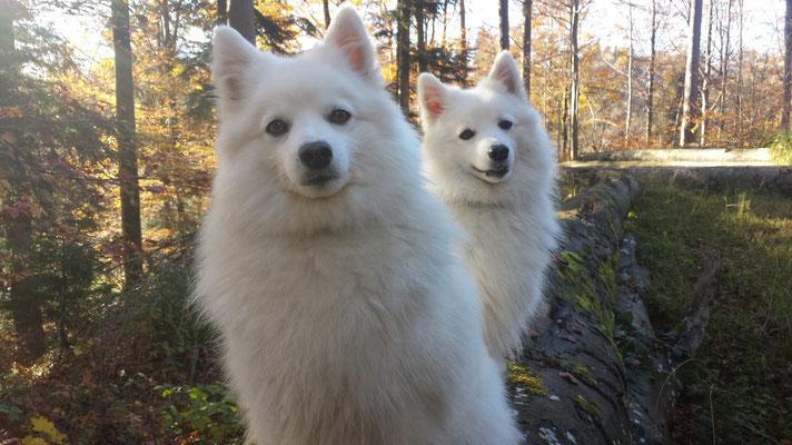 Hana vom Soonwaldblick und Aiko von der Horgenzeller Au