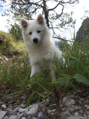 Aiko in der Bergen