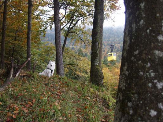 Aiko und die Bergbahn...hier darf sie nur mit Maulkorb rein...also wird gelaufen.