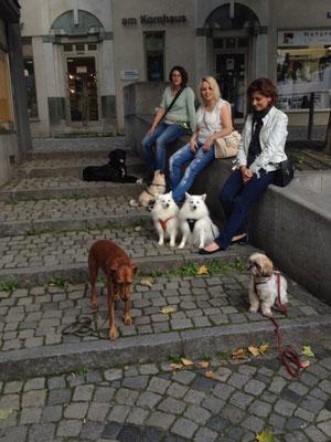 Hundetraining Ravensburg