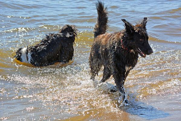 Hundespaß am Elbstrand Övelgönne