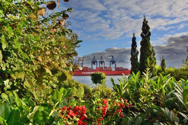Am Elbhang mit Blick Blick auf das Containerterminal BURCHARDKAI