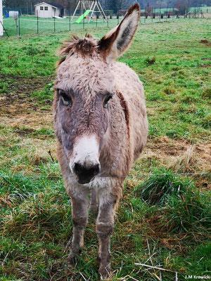 Z'avez pas vue mon soreille par hasard 😊😉. Petit arrêt pour voir l'âne à une oreille 🤔😉😁. – GR25C à Coqueréaumont secteur St Georges-sur-Fontaine.