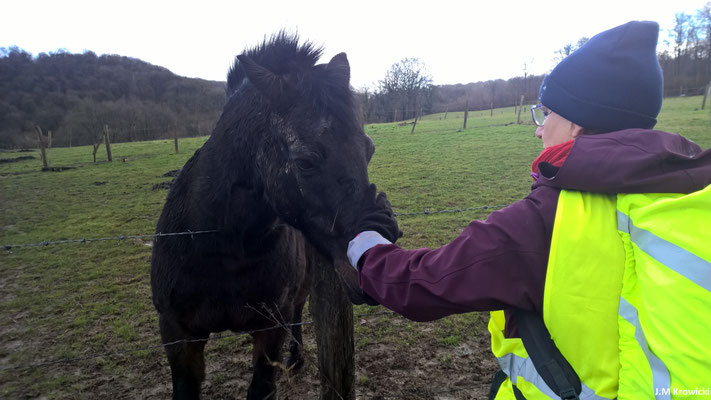 On aime les chevaux 🐴🐎 à l'ARRP 👍😊.