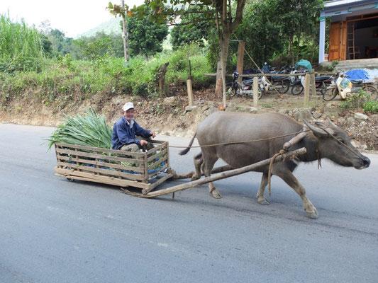 Warentransport auf dem Ho Chi Minh Pfad.