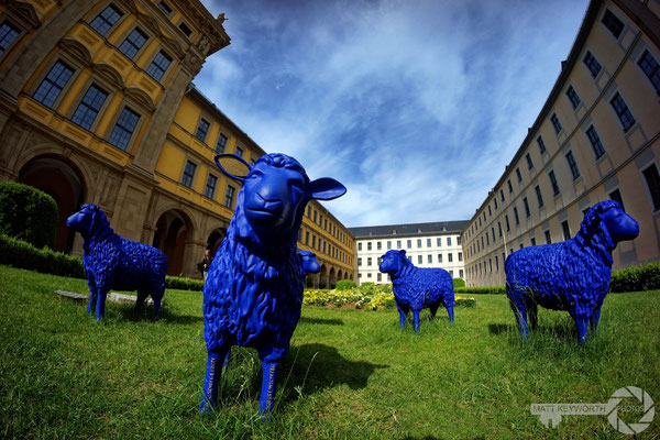 Blue Sheep of Peace