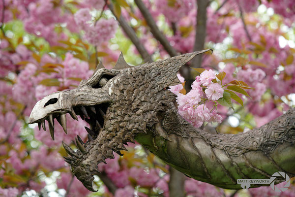 Cherry Blosom Dragon